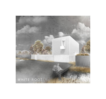 White root